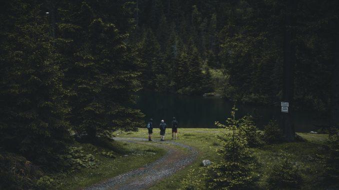 Ratgeber Waldbaden